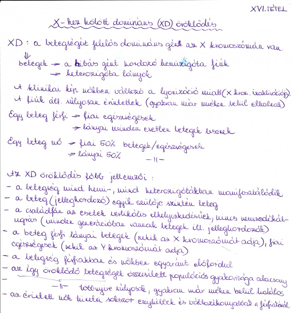 X kromoszómához kötött öröklődés: XD öröklődés