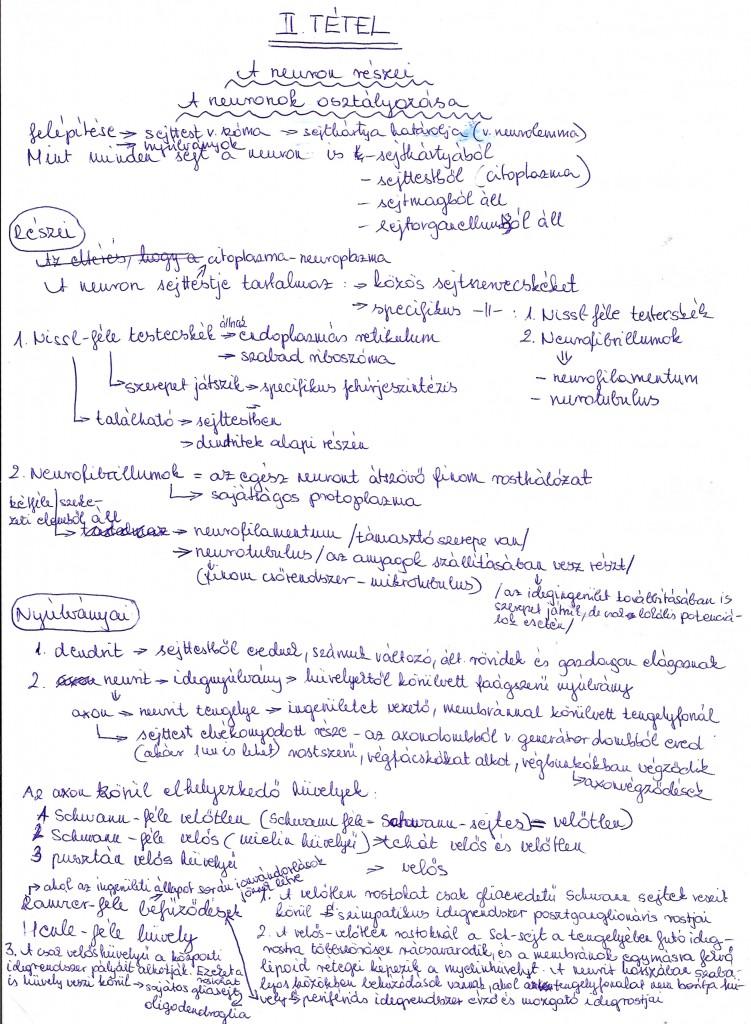 A neuronok osztályozása