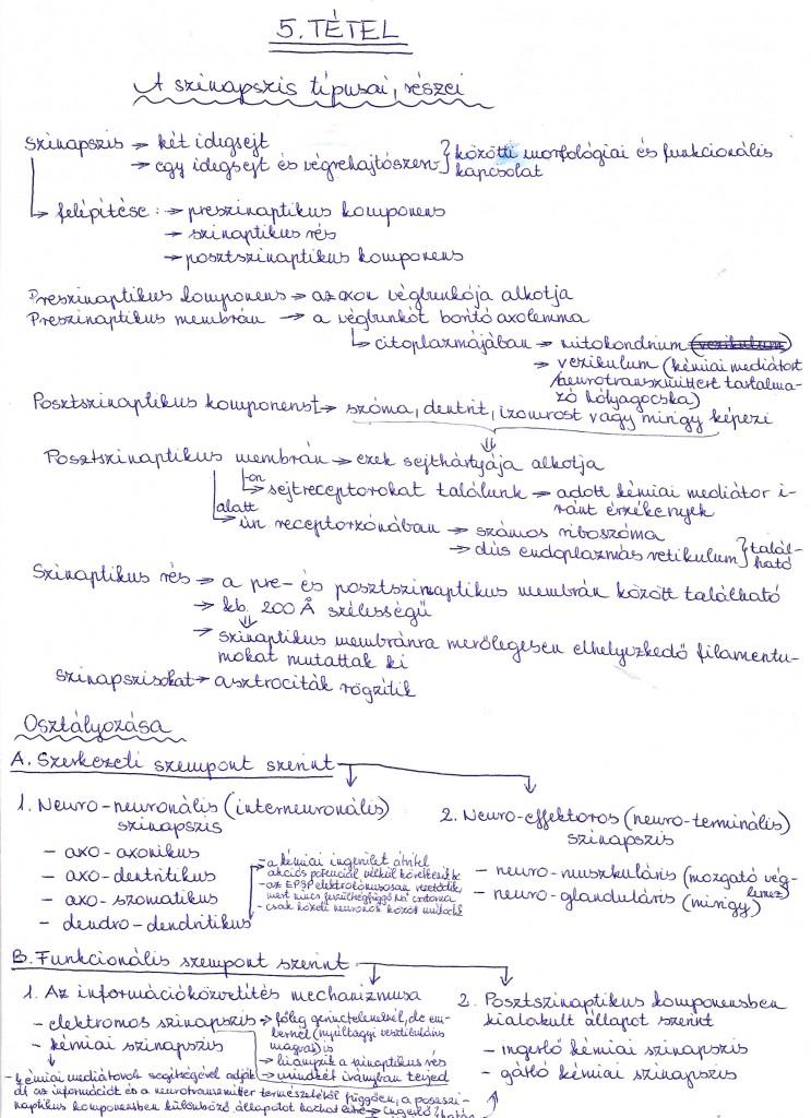 A szinapszis típusai, részei. Neuronhálózatok