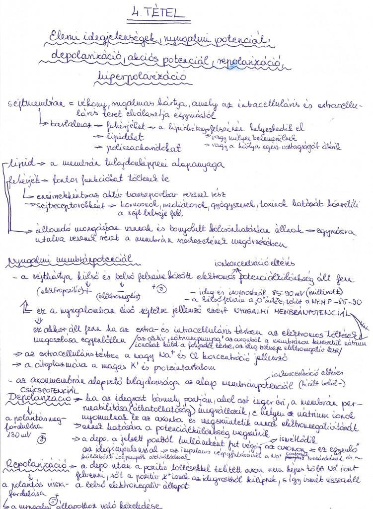 Elemi idegjelenség, nyugalmi potenciál, depolarizáció, akciós potenciál, repolarizáció, hiperpolarizáció